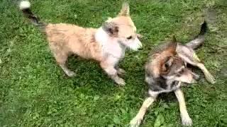 Грязные собаки 2