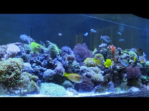 400G SALTWATER AQUARIUM (1514.16 LITROS ACUARIO MARINO) CORAL LARGE REEF TANK UPDATE PART 2