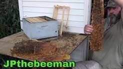 Bee Man Vs Stubborn Bees In Shed Floor