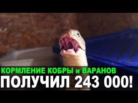 Трансы Страница 3 Порно видео из ШИРИНКИ Тысячи