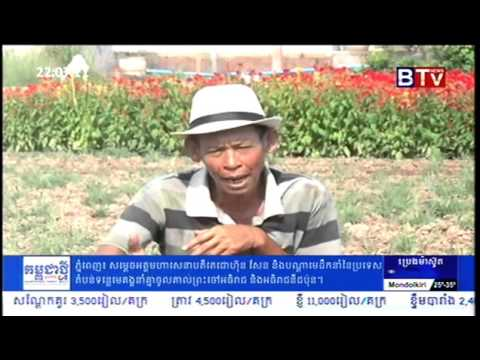 Khmer Agriculture News   Flower Farming in Cambodia   YouTube