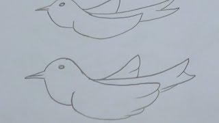 30 Saniyede Kuş Resmi Nasıl Çizilir - osman çakır