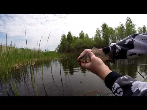 рыбалка на реке ворона в тамбовской области