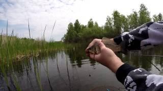 Карась на поплавок (Full HD)