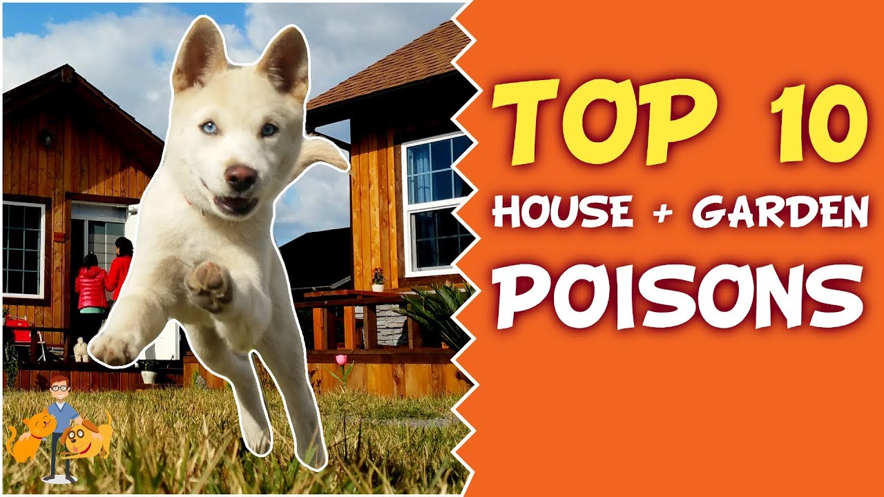 Top 10 Deadly House and Garden Poisons for Your Dog and Cat