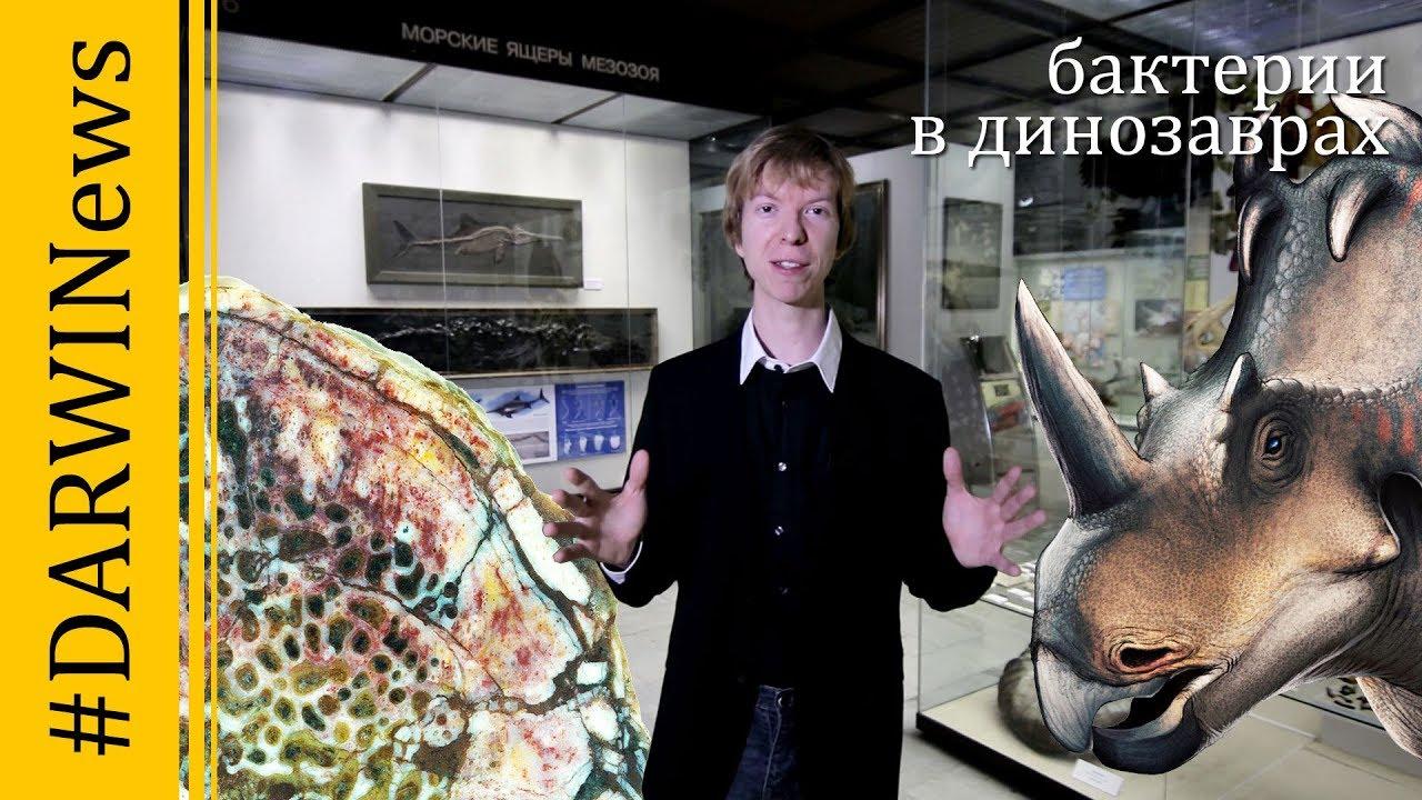 Тайна костей динозавров! Ярослав Попов #DARWINews