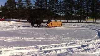 Horse And Sleigh Drifting