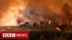 Eight dead as wildfires engulf Turkey resorts - BBC News