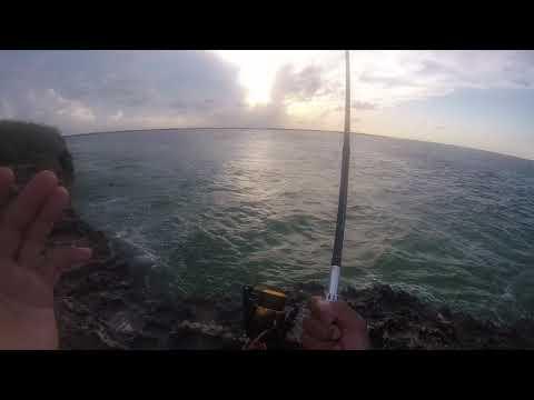 Barracuda Jetty Fishing Cayo Santa Maria, Cuba