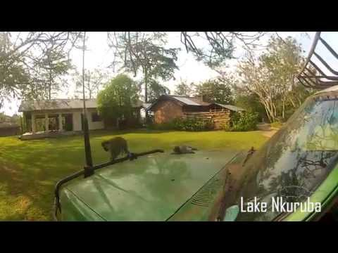 Ugandan Safari