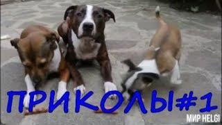 ПРИКОЛЫ С ЖИВОТНЫМИ 2020 ! Приколы с животными Смешные животные JOKES WITH ANIMALS