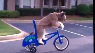 У собак тоже есть способности