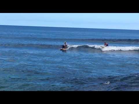 Surf dog at Puerto Rico