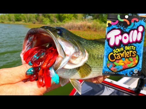 Gummy Worm Fishing Challenge | Ace Videos