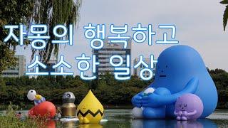 자몽일상 (약현성당  경매수업 롯데월드몰 소다구두 SU…