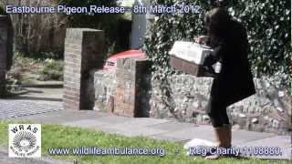 Eastbourne Pigeon Release - 8th March 2012