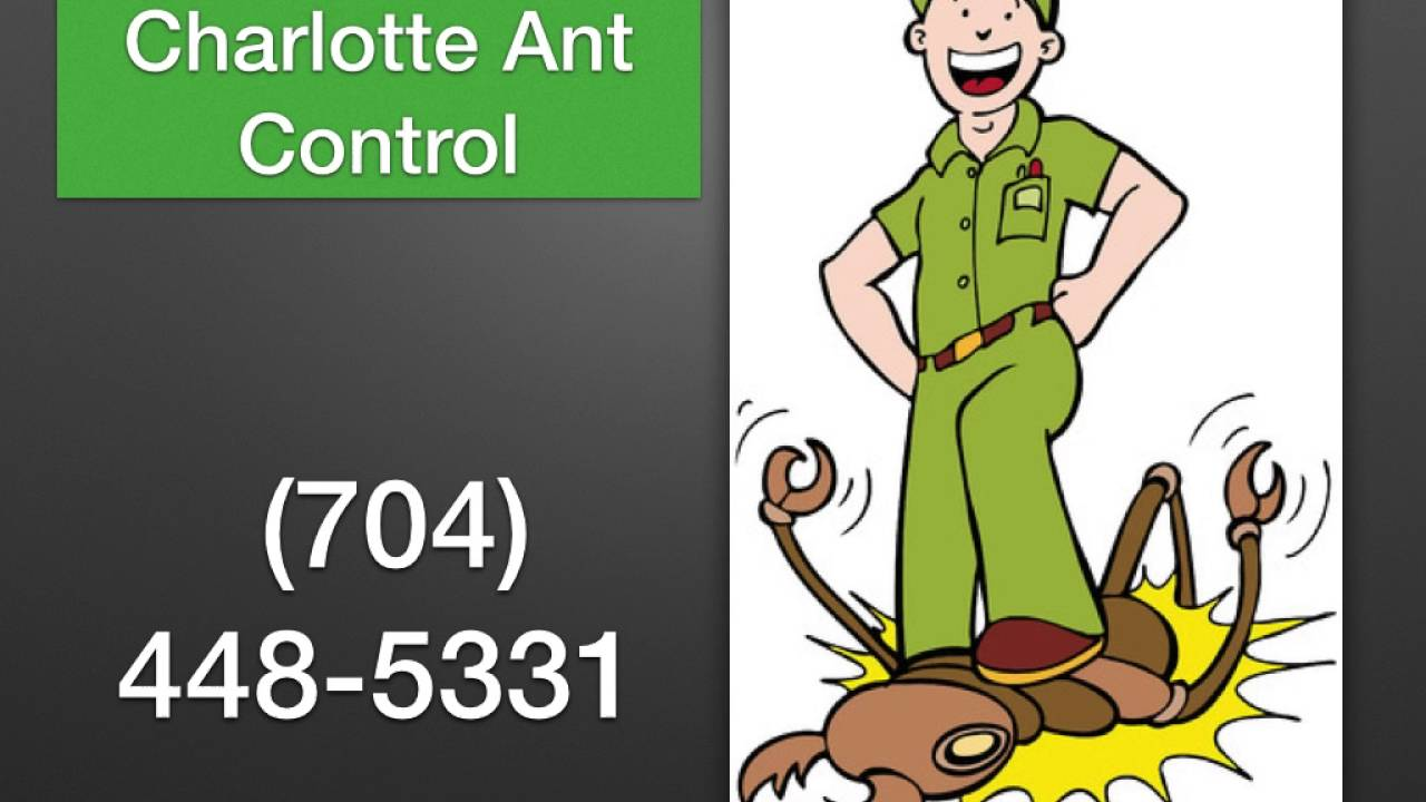 All out pest control lakeland fl - Southfield theater movie