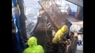 Bering Sea King Crab 2012 II