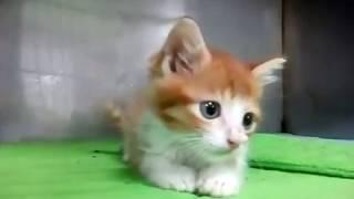 Маленький котенок котенок после операции играет.
