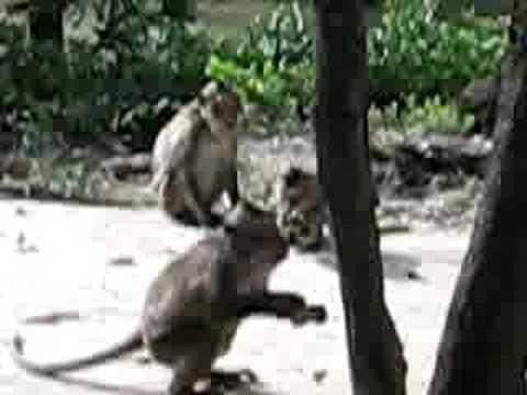 Cho khỉ ăn chuối