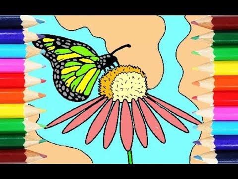 Belajar Mewarnai Hewan Kupu Kupu Di Atas Bunga Indah Bermain Dan
