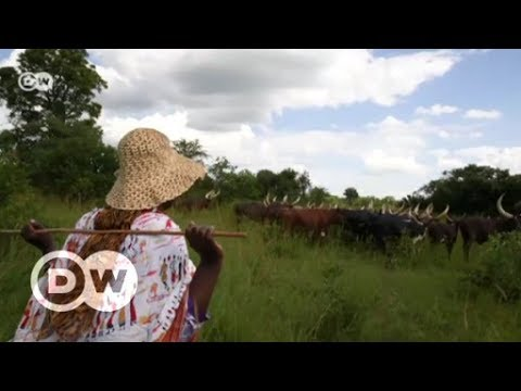 Uganda's indigenous cattle and one woman's fight to protect them | DW English