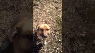 Значение слова Собака, плюсы и минусы)