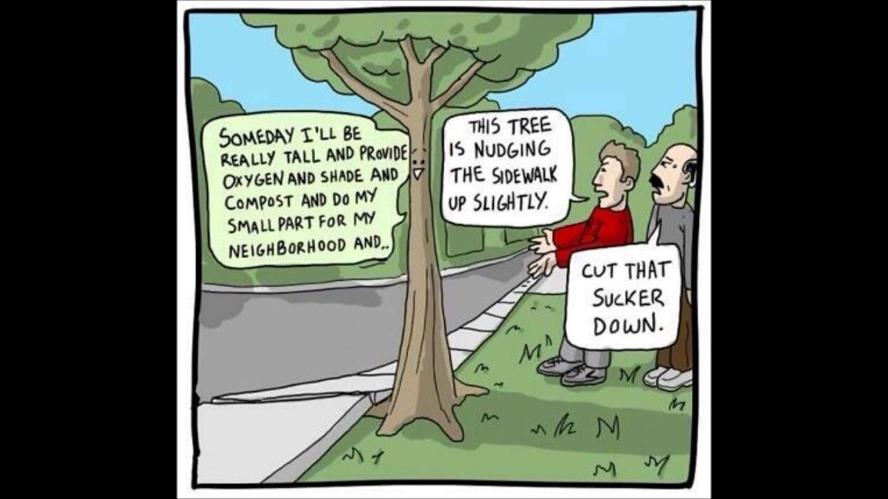 saving our trees The latest tweets from save our trees (@savetress): guys you can help the world by going to.