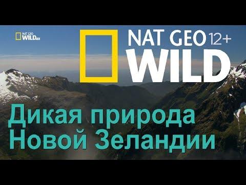 Nat Geo Wild: