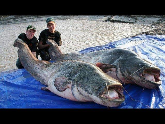 7 Peixes Monstruosos Da Amazônia Que Não Conhecia