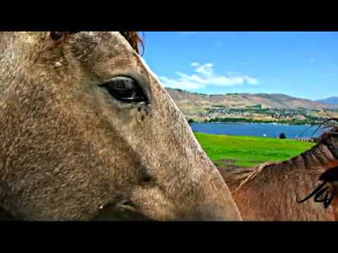 Paradise Ranch Peruvian Paso Horses - Vernon BC