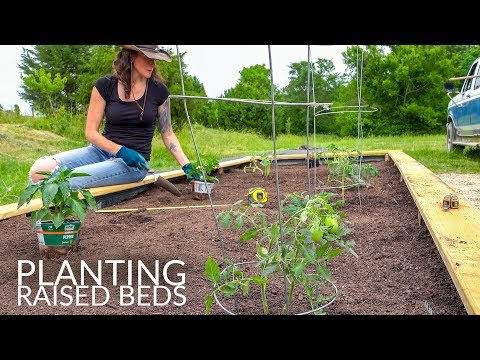 Planting A Raised Bed Vegetable Garden