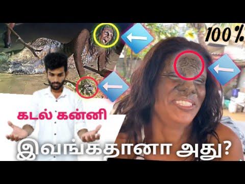 Download Real Mermaid caught in sri lanka || கடல் கன்னி || mermaid in sri lanka || mermaids real videos