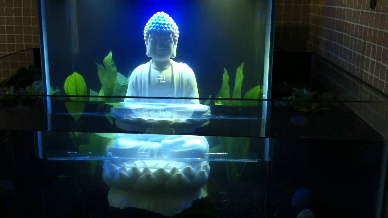 Open bottom fish tank buddha youtube for Fish tank youtube