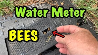 Bees in a Water Meter - Fun Removal