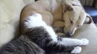 Dovada ca pisica si catelul se pot intelege chiar foarte bine :D