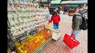 Goldfish Market | Khám phá chợ hàng, nơi bán cá cảnh lớn nhất ở hải phòng