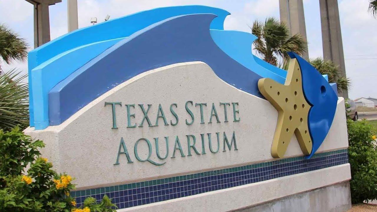 Texas State Aquarium Acuario Estatal De Texas Corpus
