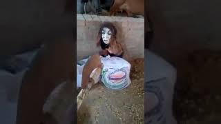 Alein in Karnataka village shocking || please subscribe