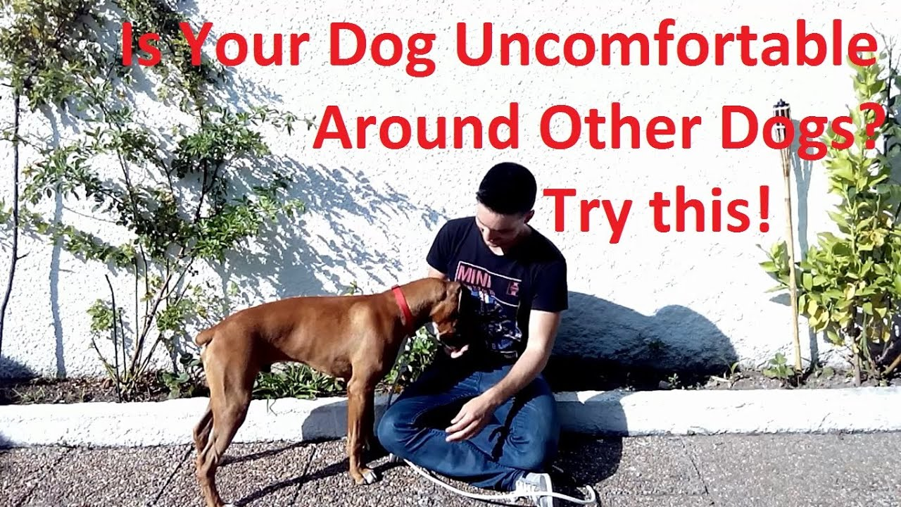 how to train your dog to be silent