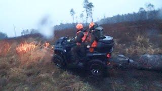 Охота 252 загонная с собаками в лесу