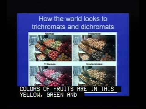 The Evolution of Primate Color Vision