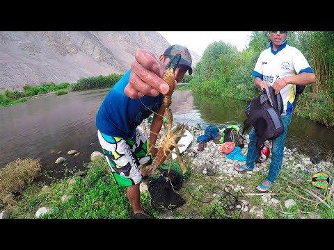 Pesca de Camarones en Río - Pescando Camarones con Atarraya