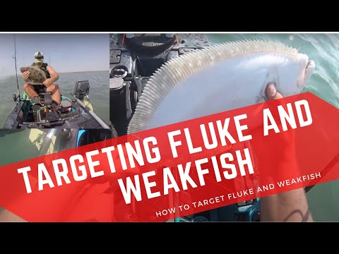 One Way To Target Fluke And Weakfish - Outgoing Tide ( How To Catch Fluke And Weakfish )