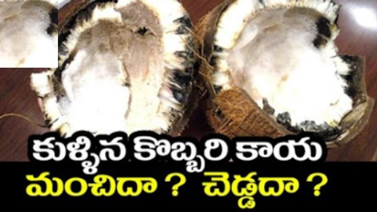 Spoiled Coconut in puja    Is it a bad sign?? For MoreVideos Plus Tv