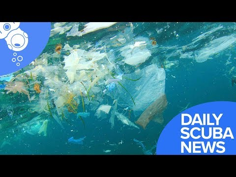 Daily Scuba News - Whales Daily Diet Of 171 Plastic Items