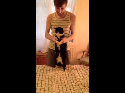 tUnE-yArDs Cat Dance