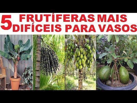 as-5-frutíferas-mais-difíceis-para-se-ter-em-vasos-!