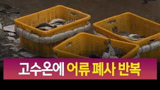 고수온에 어류 폐사 피해 반복.. 대책 시급/ 안동MB…