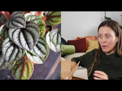 Houseplant Shopping Online! | Indoor Plant Unboxing & Haul! ThePlantFarm Plant Unboxing & Review!